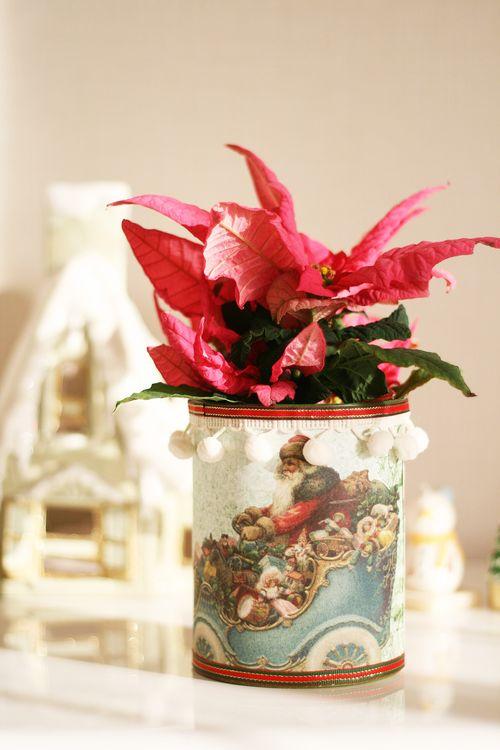 クリスマス缶ポインセチア